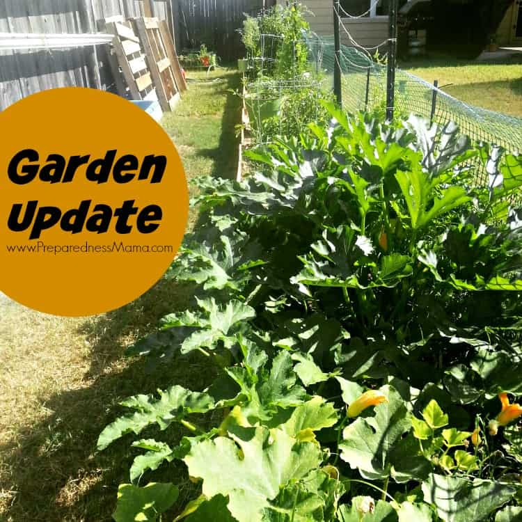 How's my new garden doing? Just great thanks! Hers's an update | PreparednessMama