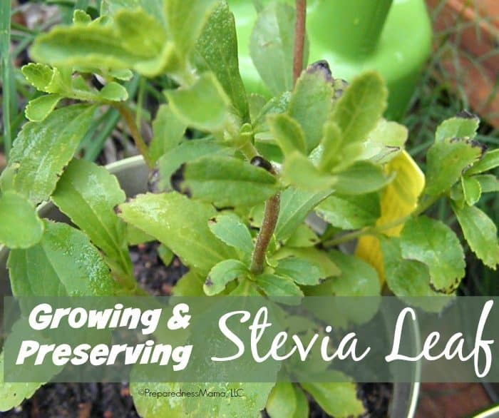 How to Make Stevia Syrup