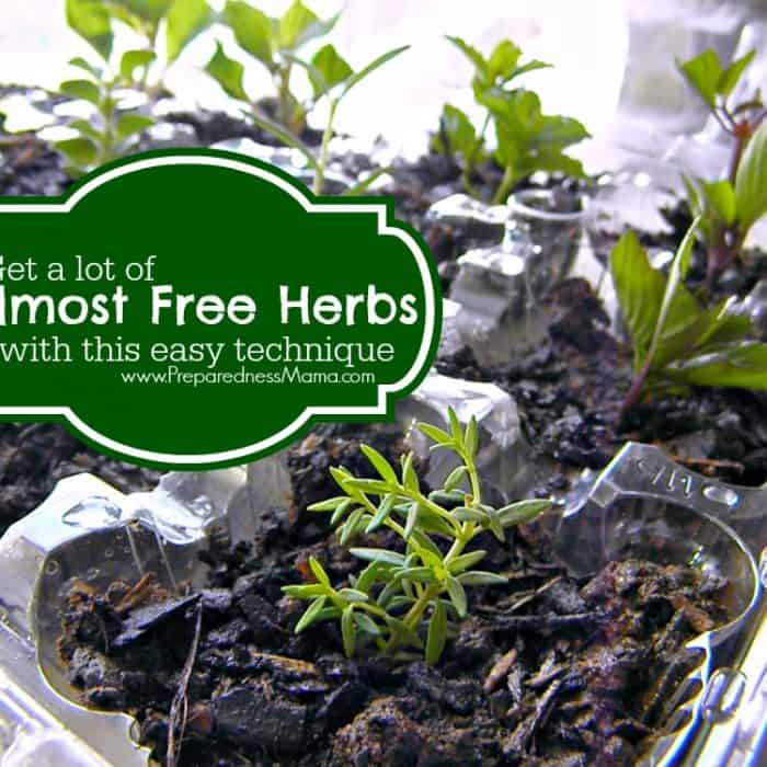 Get a lot of herbs - almost for free - with this easy technique | PreparednessMama