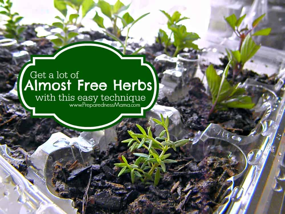 Get a lot of almost free herbs with this easy technique | PreparednessMama