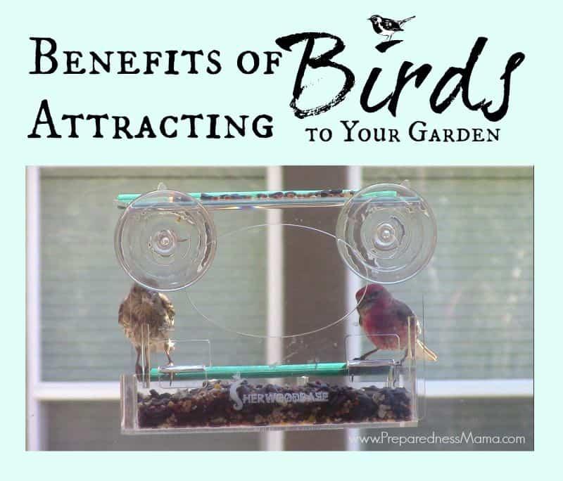 The benefits of attracting birds to your garden | PreparednessMama