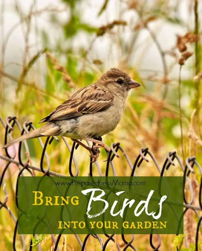 Attract birds to your garden for pest management | PreparednessMama