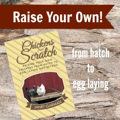 Chickens from Scratch- book review | PreprednessMama