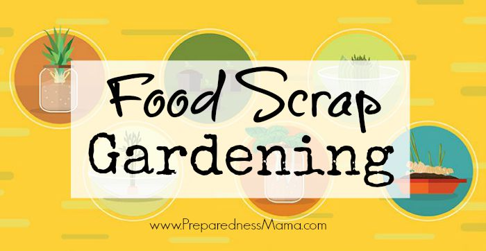 Have you ever tried food scrap gardening? Save this handy infographic for later and bring the sumer garden into your kitchen all winter long | PreparednessMama