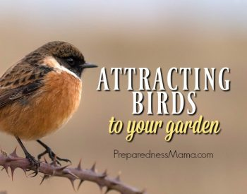 Benefits of Attracting Birds to your Garden