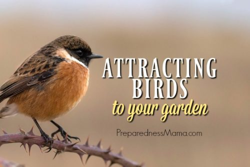 Benefits Of Attracting Birds To Your Garden Preparednessmama