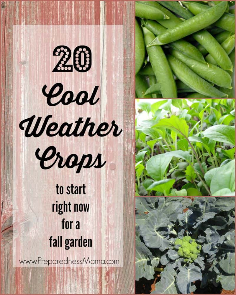 20 cool weather crops to begin right now for a fantastic fall vegetable garden | PreparednessMama