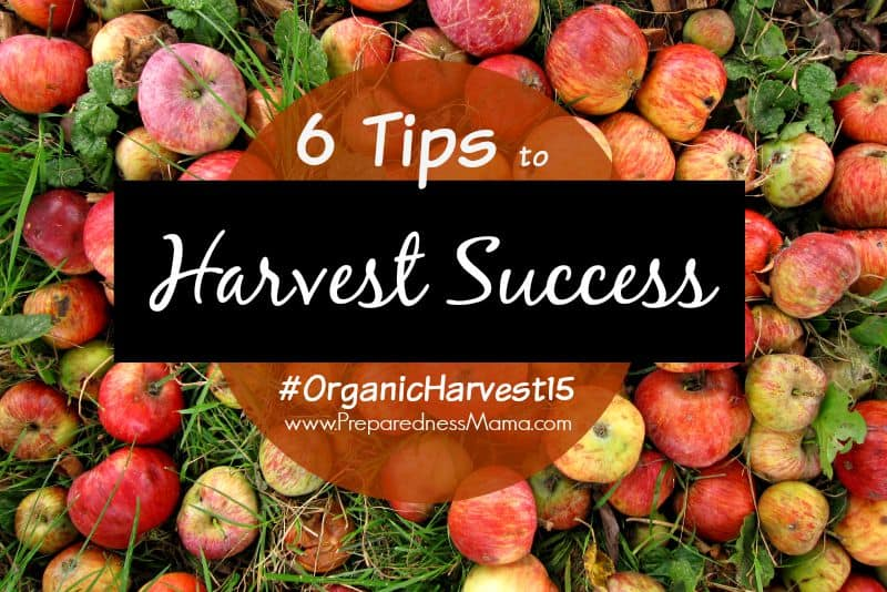 6 Tips for Harvest Success, part of  #OrganicHarvest15 | PreparednessMama