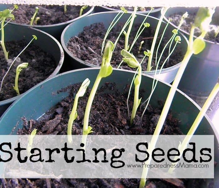 Fall Seed Starting Tutorial