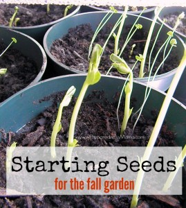Starting seeds for the fall garden: a tutorial | PreparednessMama