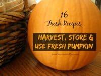 Take advantage of the pumpkin harvest and learn how to harvest, process and use fresh pumpkin. 16 fresh recipes #OrganicHarvest15 | PreparednessMama