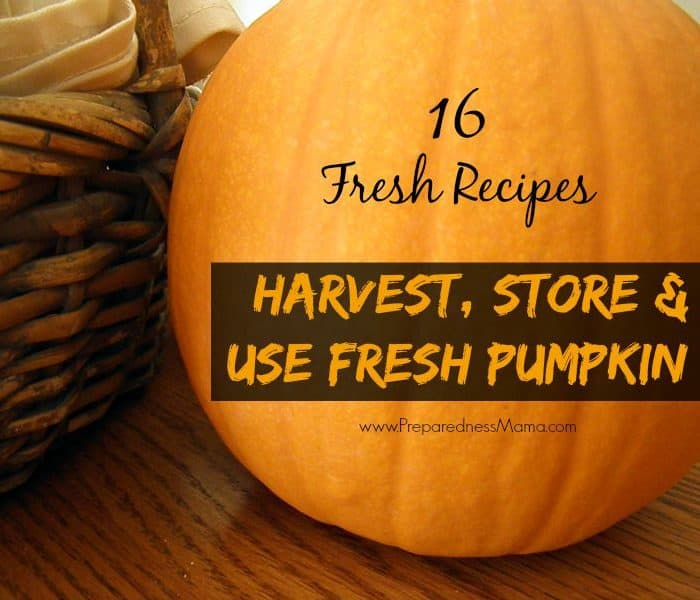 Harvest, Store & Use Fresh Pumpkin