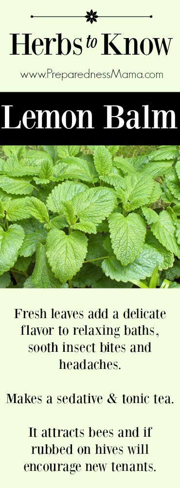 """Herbs to Know"""" Lemon Balm. Another tasty member of the mint family 