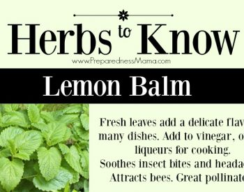 Herbs to Know Lemon Balm. Another tasty member of the mint family | PreparednessMama