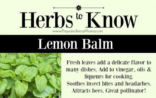 Herbs to Know
