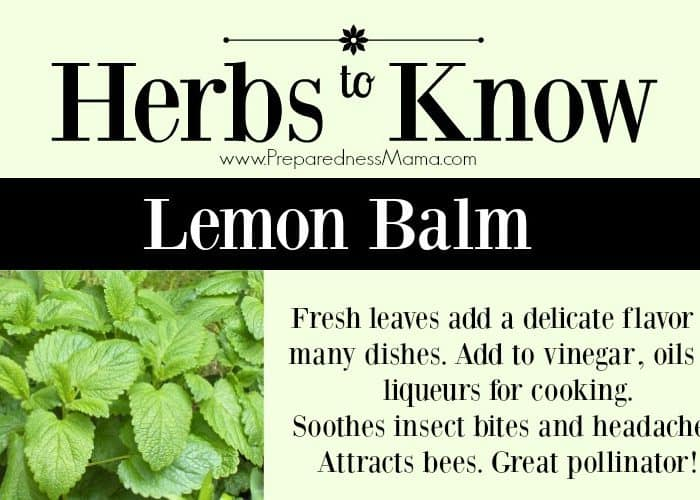 Herbs to Know Lemon Balm