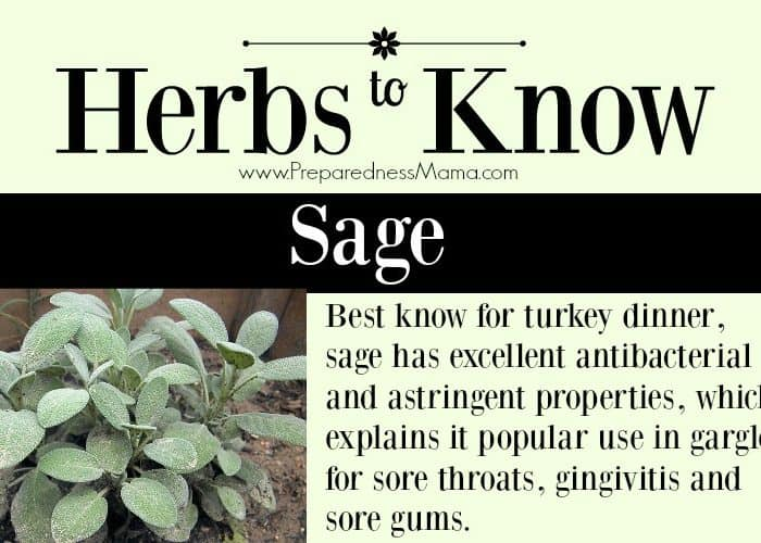 Herbs to Know: Sage