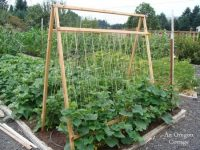 Vertical Gardening Roundup - 5 Reasons to Grow Cucumbers on a Trellis from An Oregon Cottage | PreparednessMama