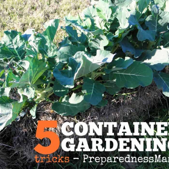 5 Container gardening tricks for any size garden | PreparednessMama