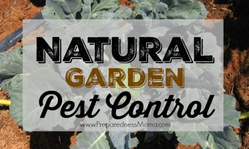 There are many alternatives for natural garden pest control. Use one in your garden this year | PreparednessMama