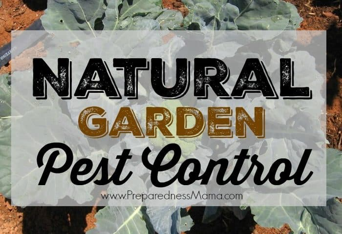 Natural Garden Pest Control Methods