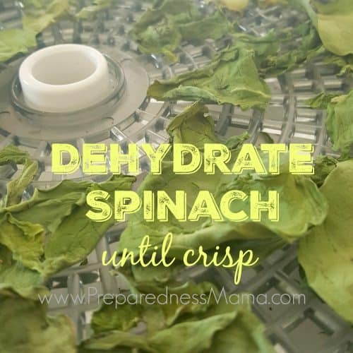 How to dehydrate spinach | PreparednessMama
