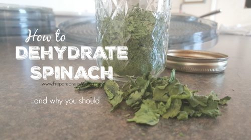 If you purchase fresh produce in bulk it can be sometimes be hard to eat it all before it goes bad. Learn how to dehydrate spinach and always have a supply | PreparednessMama