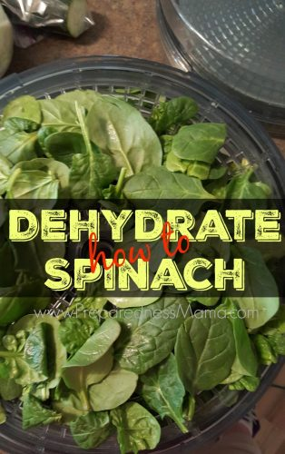 How to Dehydrate spinach and why you want to | PreparednessMama