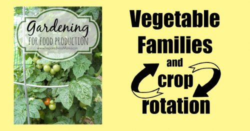 Crop rotation by vegetable families. I use a four year cycle to help cut down on soil disease and build soil health | PreparednessMama