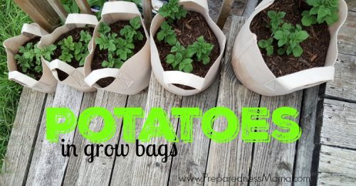 Try your hand at growing potatoes in grow bags. Easy to control the soil and watering requirements | PreparednessMama