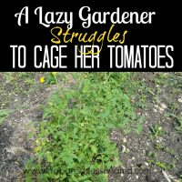 Caging tomatoes lazy gardener style - A lazy gardener struggles to cage her overgrown tomato plants | PreparednessMama