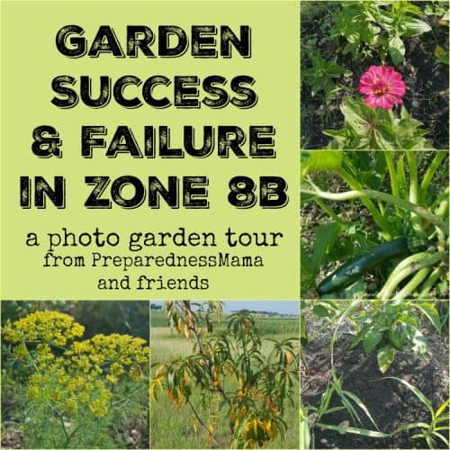 Garden success and failure in Central Texas garden zone 8b. | PreparednessMama