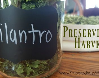 How to Dehydrate Cilantro for a Steady Supply