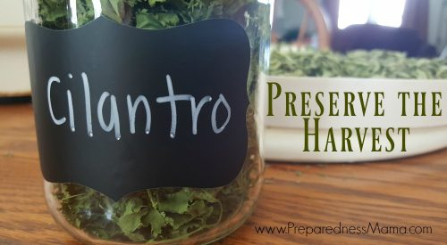 Preserve the harvest by Dehydrating Cilantro | PreparednessMama