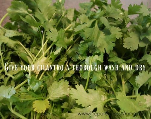 Give the cilantro a thorough wash and dry | PreparednessMama