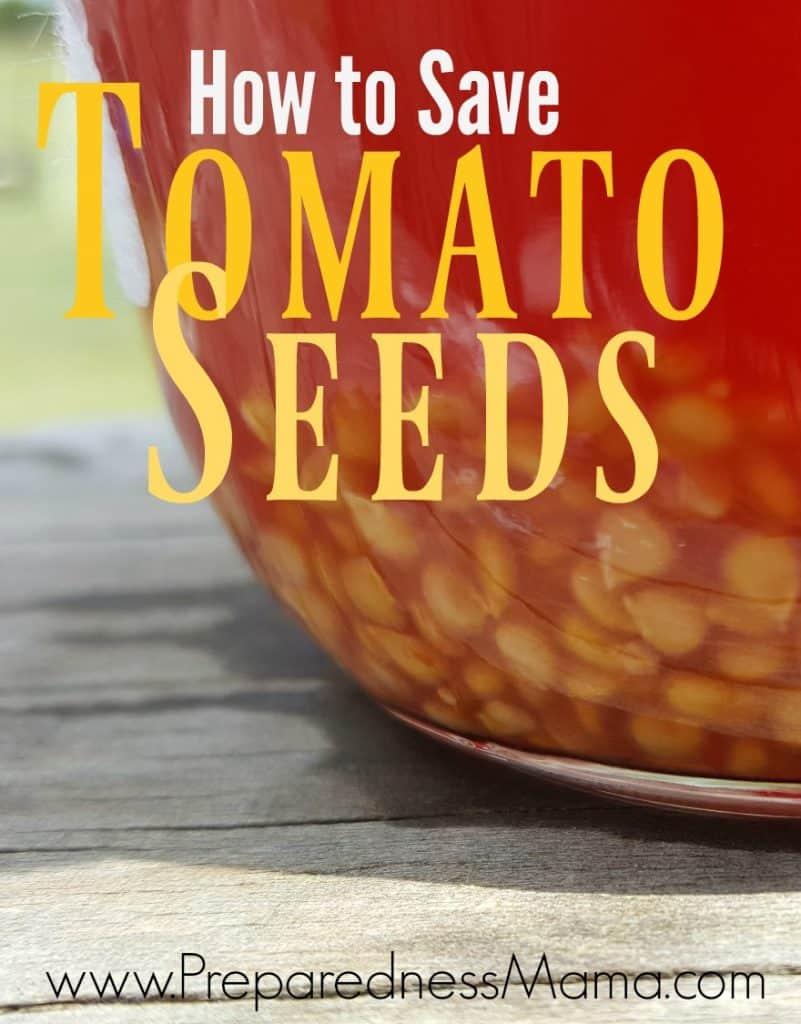How to save heirloom tomato seeds using the fermentation process | PreparednessMama