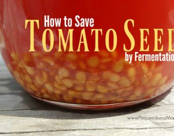 How to Save Heirloom Tomato Seed