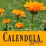 Calendula Herbal Recipes for Health & Gifts