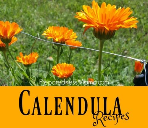 The healing properties of Calendula officinalis make it an excellent addition to your herb garden. Here are 6 Calendula herbal recipes to try today. | PreparednessMama