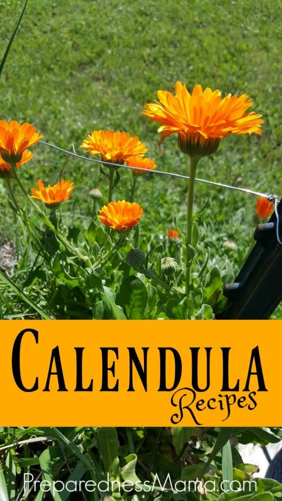 6 calendula herbal recipes for health and gifts | PreparednessMama