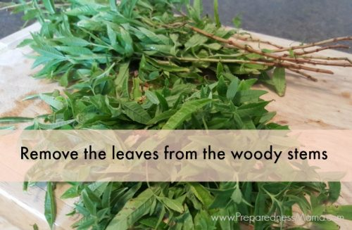 Prepare the lemon verbena. Rinse off the leaves and remove them from the woody stems. | PreparednessMama