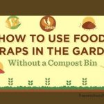 Trench Composting Basics