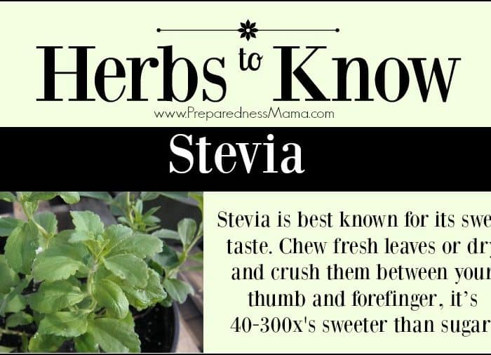 Herbs to Know Stevia rebaudiana