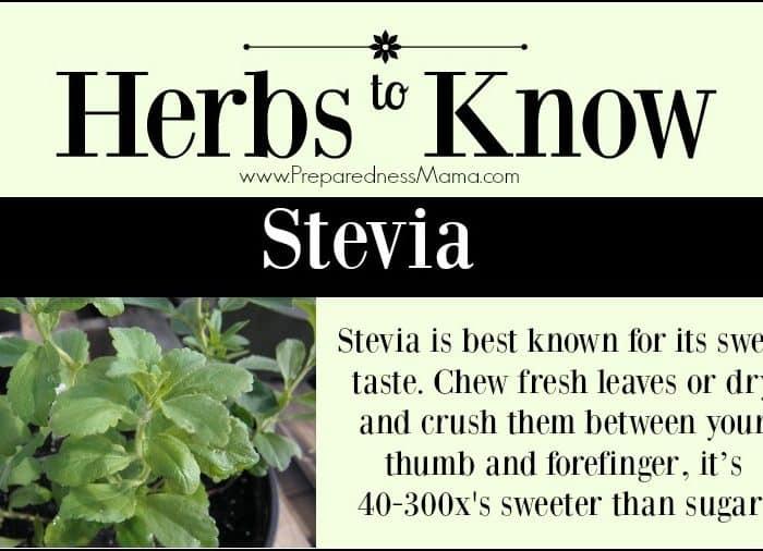 Herbs to Know Stevia rebaudiana