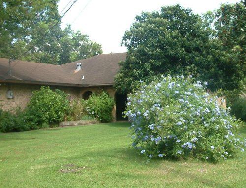 An overgrown yard with shrubs blocking windows can invite theft | PreparednessMama