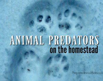 Animal Predators on the Homestead