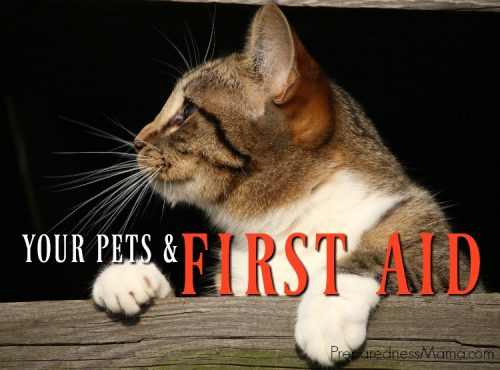 It is important to know how to take care of your pet during emergencies. Knowing pet first aid techniques may save you money and even save their life   PreparednessMama