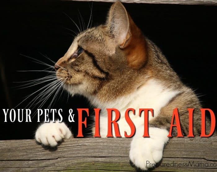 Pet First Aid for Emergencies or Everyday