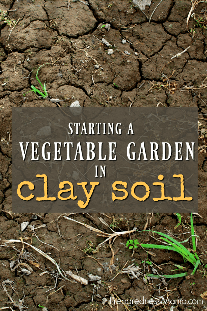Starting a vegetable garden in clay soil is possible if you have patience and stick to the rules. Learn about amending and mulching for the best crops   PreparednessMama