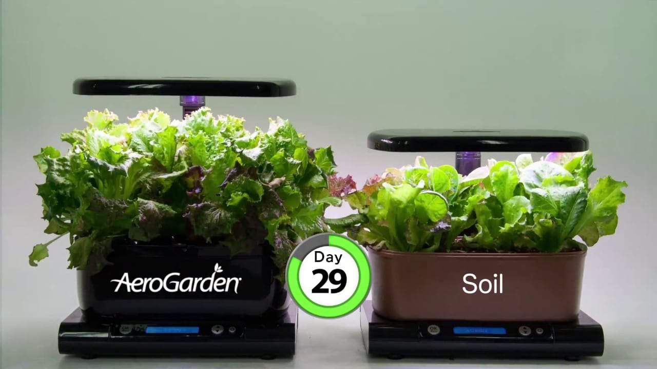 green leafy plants grown on a tray of AeroGarden Harvest and another set of plants grown on a tray of soil